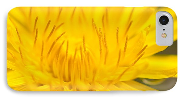 Dulcet Dandelion IPhone Case