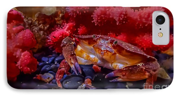 Dungeness Crab IPhone Case