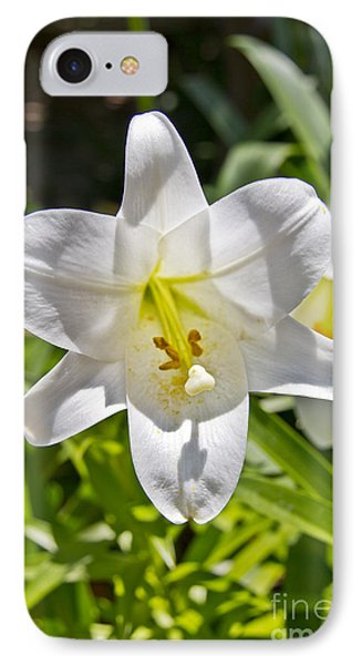 Easter Lilly 1 IPhone Case