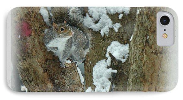 iPhone 8 Case - Eastern Gray Squirrel - Sciurus Carolinensis by Mother Nature