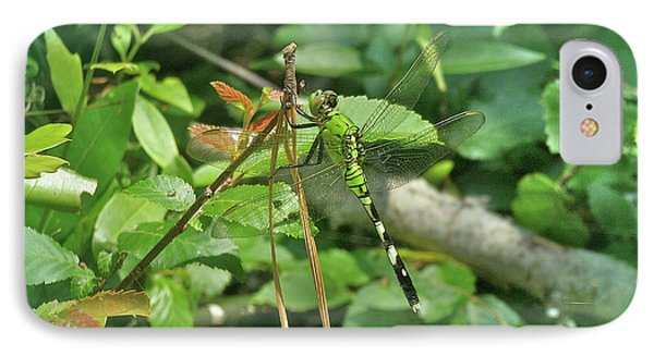 iPhone 8 Case - Eastern Pondhawk Female Dragonfly - Erythemis Simplicicollis - On Pine Needles by Mother Nature