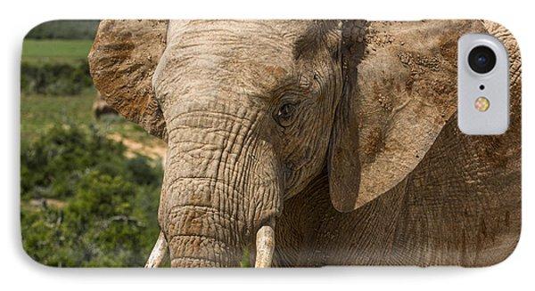 Elephant Profile IPhone Case