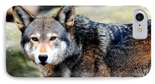 Endangered Red Wolf IPhone Case
