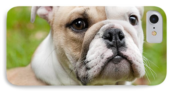 Dog iPhone 8 Case - English Bulldog Puppy by Natalie Kinnear