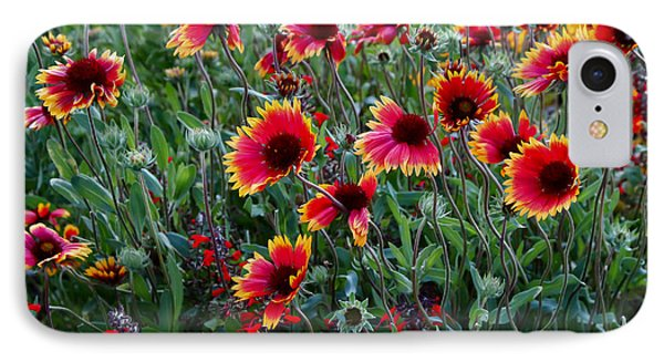 Evening In Bloom IPhone Case