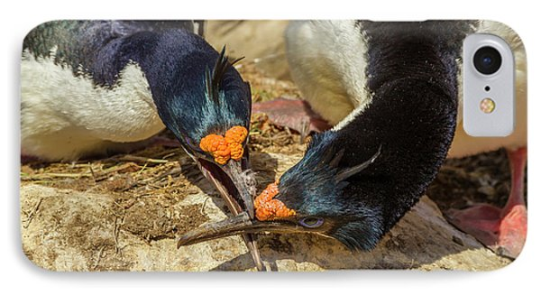Falkland Islands, Carcass Island IPhone Case