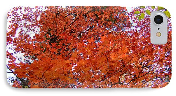 Fall Colors 6359 IPhone Case