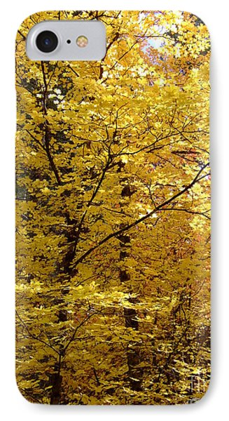 Fall Colors 6371 IPhone Case
