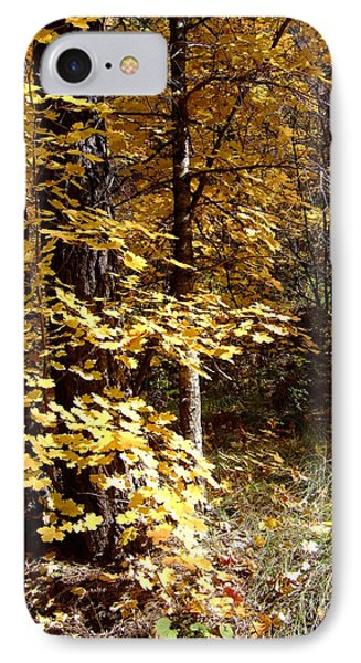 Fall Colors 6404 IPhone Case