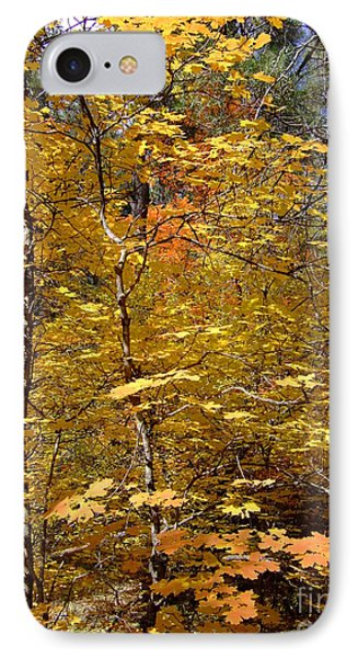 Fall Colors 6446 IPhone Case