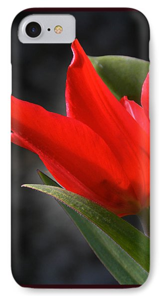Fancy Tulip IPhone Case