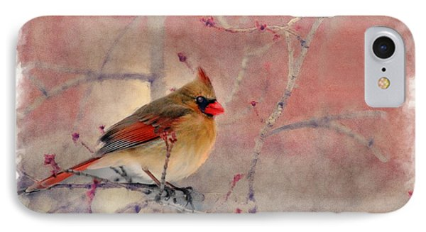 Female Cardinal Portrait IPhone Case