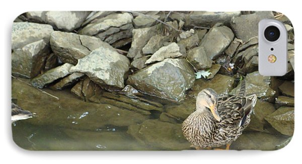 Female Mallard IPhone Case