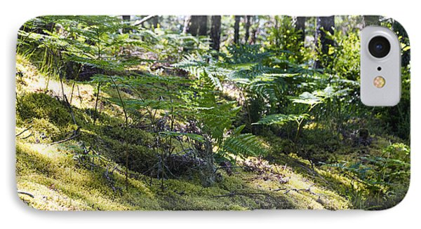 Ferns And Shadows IPhone Case
