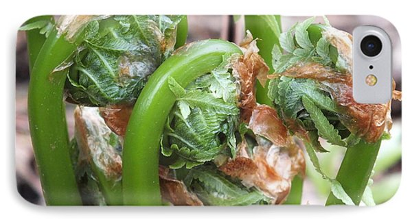 Fiddleheads In Spring IPhone Case