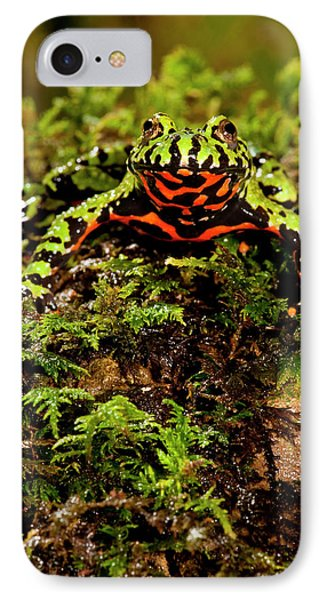 Fire Belly Toad Bombina Orientalis IPhone Case