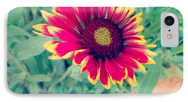 Fire Daisy IPhone Case