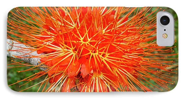 Belize iPhone 8 Case - Flame Of Panama Flower (brownea by William Sutton