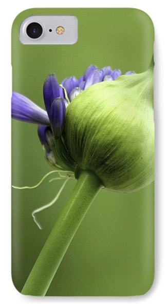 Floret Cluster Emerging  - The Agapanthus Series IPhone Case