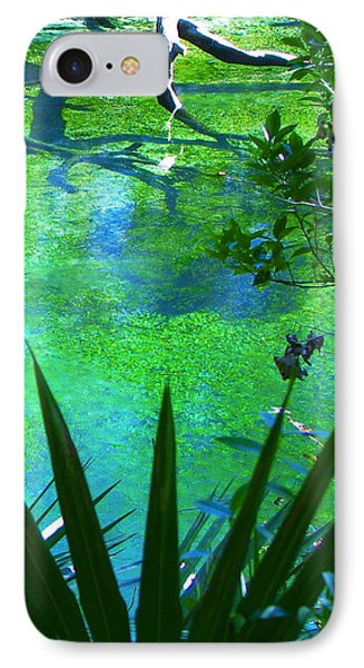 Florida Swamp With Driftwood IPhone Case