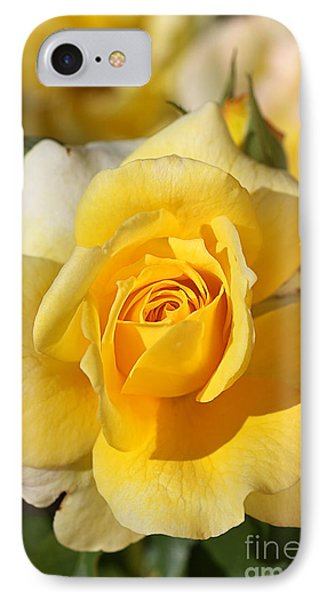 Flower-yellow Rose-delight IPhone Case