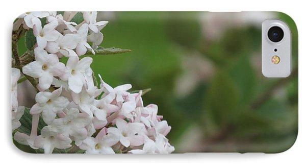 Flowering Shrub 4 IPhone Case
