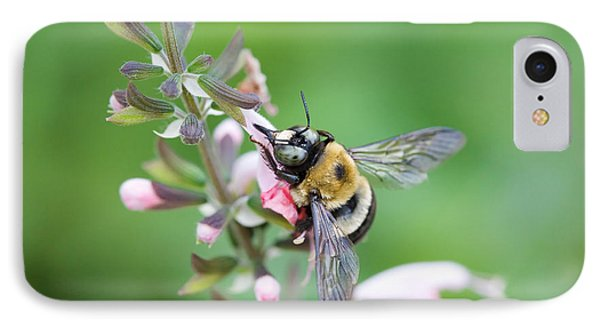 Foraging For Nectar IPhone Case