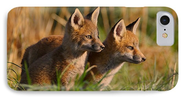 Fox Cubs At Sunrise IPhone Case
