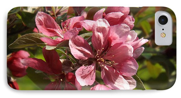Fragrant Crab Apple Blossoms IPhone Case