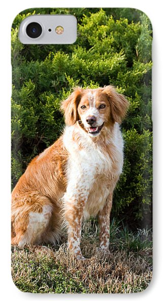 French Brittany Spaniel IPhone Case
