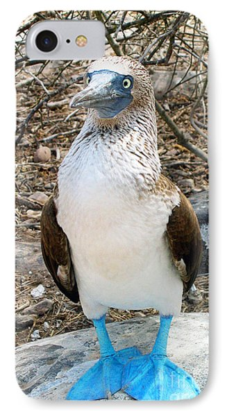Galapagos Island Blue Footed Booby Bird 1 IPhone Case