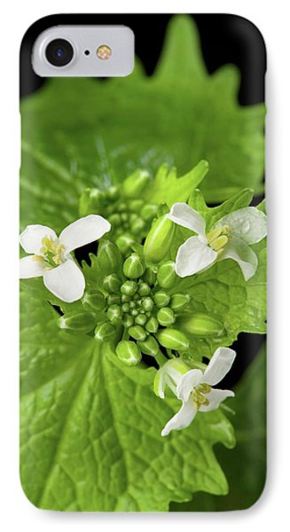 Mustard iPhone 8 Case - Garlic Mustard Flowers by Peggy Greb/us Department Of Agriculture
