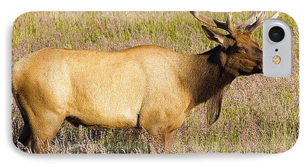 Gazing Elk IPhone Case