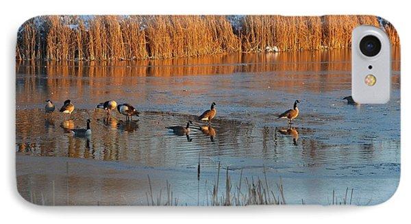 Geese In Wetlands IPhone Case