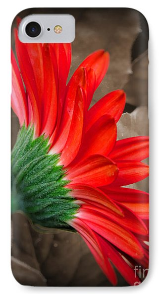 Gerber Daisy Bashful Red IPhone Case
