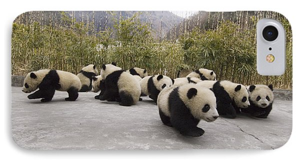 Giant Panda Cubs Wolong China IPhone Case