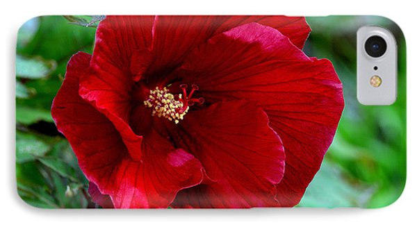 Giant Red Hibiscus IPhone Case