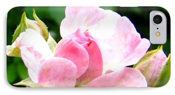 Glorious Rosebud IPhone Case