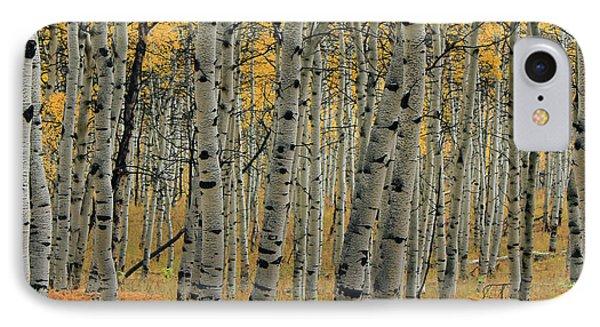 Golden Aspen Forest IPhone Case