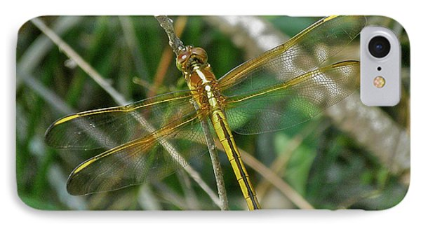iPhone 8 Case - Golden Dragonfly At Rest by Mother Nature