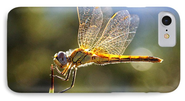 Golden Dragonfly IPhone Case