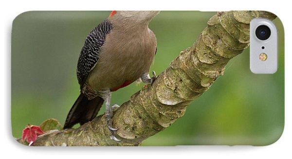 Belize iPhone 8 Case - Golden-fronted Woodpecker (melanerpes by William Sutton