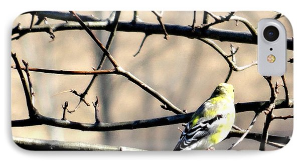Goldfinch On Budding Branch IPhone Case