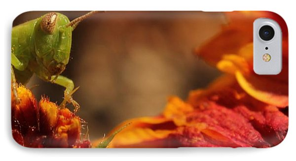 Grasshopper In The Marigolds IPhone Case