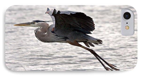 Great Blue Heron Landing Series 1 IPhone Case