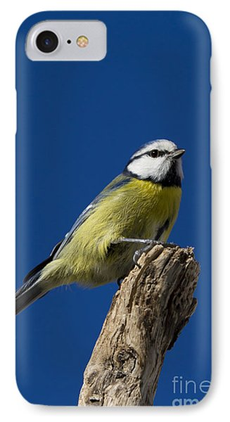 Great Tit On Blue IPhone Case