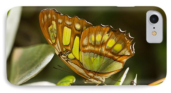 Green And Brown Tropical Butterfly IPhone Case