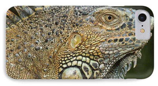Belize iPhone 8 Case - Green Iguana (iguana Iguana by William Sutton