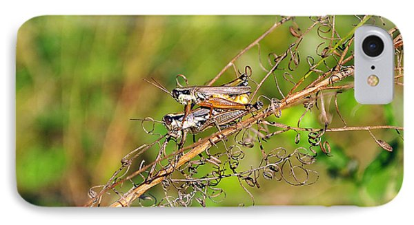 Gregarious Grasshoppers IPhone Case