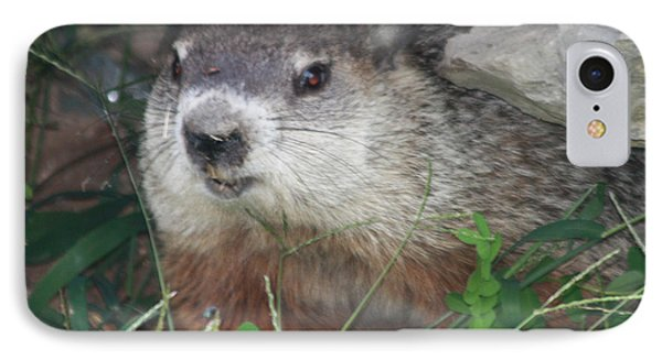 Groundhog Hiding In His Cave IPhone Case